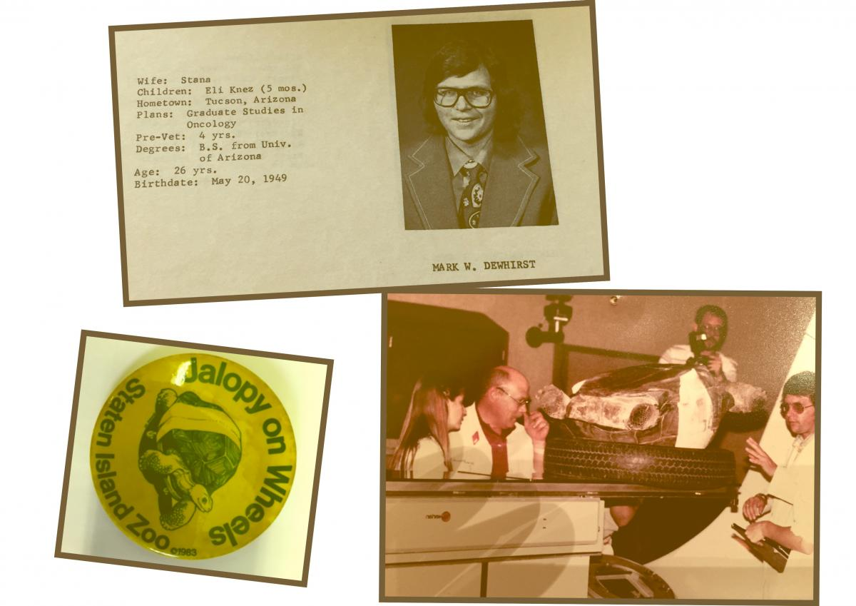 "TOP: Yearbook photo from Colorado State University BOTTOM RIGHT: Mark Dewhirst, DVM, PhD, (far right) administers radiotherapy to Jalopy, a tortoise from the Staten Island Zoo suffering from sarcoma. ""We used the tire from my son's tire swing to immobilize him after we had placed him into a cold room to slow him down, since reptiles cannot maintain their own body temperature,"" said Dewhirst. ""You can see the gantry of the linear accelerator, which was rotated around so that we could treat the tumor from several angles."""