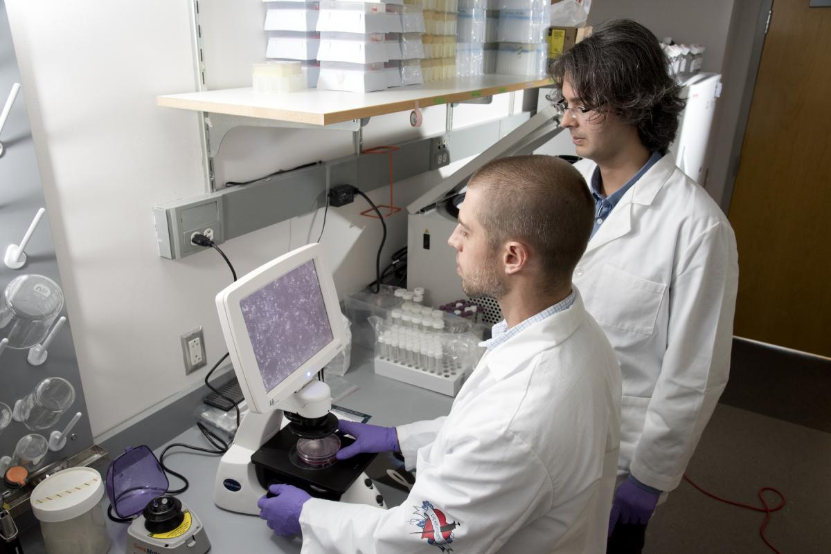 Jason Somarelli, Phd (left) and Erdem Altunel, MD (right) examine canine sarcoma cells under the microscope. (photo by Les Todd)